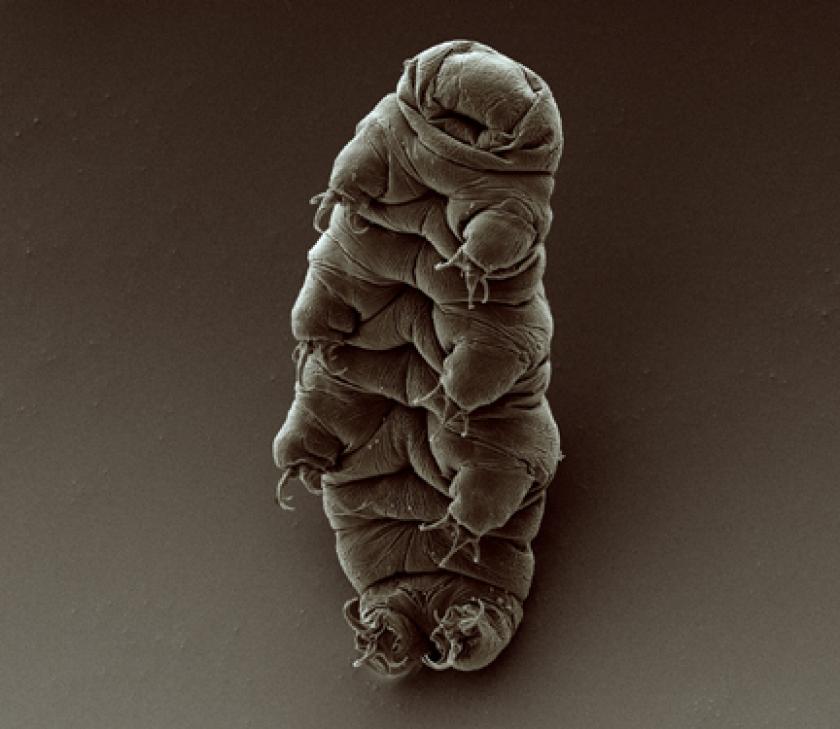 etios biomimétisme écosystème tardigrade innovation lézard blob crevette mante algue champignon blue economy recherche science